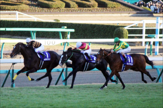 JRA「3億円馬」サトノジェネシスをルメールも絶賛! サトノダイヤモンド全弟がブラストワンピースを上回る「驚愕タイム」でクラシックに名乗り!の画像1