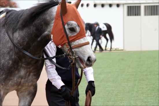 【京成杯(G3)展望】クラシックへ向けて好スタートを切るのはどの馬か?伝統の3歳重賞は今年も混戦模様!?の画像1