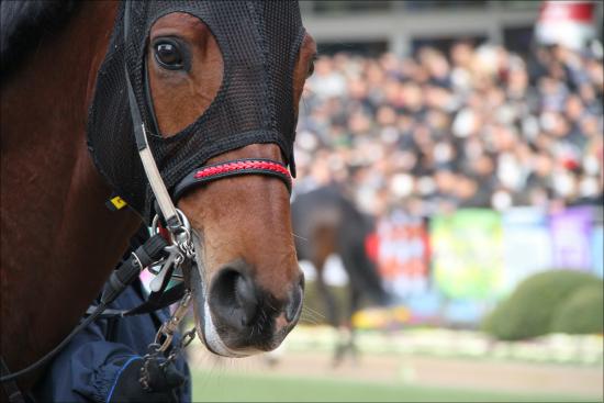 ディープインパクト「超高額息子」出走! 大出世レース若駒Sに未来あふれる素質馬集結の画像1