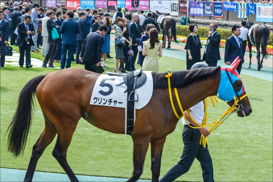武豊オジュウチョウサン「100%」5馬身ぶっちぎり! 有馬記念(G1)1週前追い切りは「あの馬」に一抹の不安......の画像6