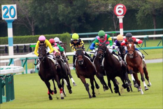 JRA「大活躍」ヴィクトワールピサ産駒エールヴォア圧勝! 大種牡馬を向こうに回す活躍も顕著な傾向が