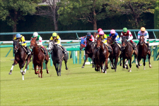 【スワンS(G3)展望】牝馬同士の熱戦となるか?レッツゴードンキが3歳牝馬を迎え撃つ!