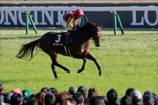 JRA「日本人騎手の希望」となれ!? 石橋脩ラッキーライラックに「ミス」は許されないの画像1