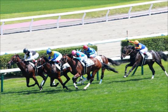 JRA三冠オルフェーヴルそっくり! 「最後の妹」デルニエオールの新馬戦快勝よりも気になる「一族の目つき」の画像1