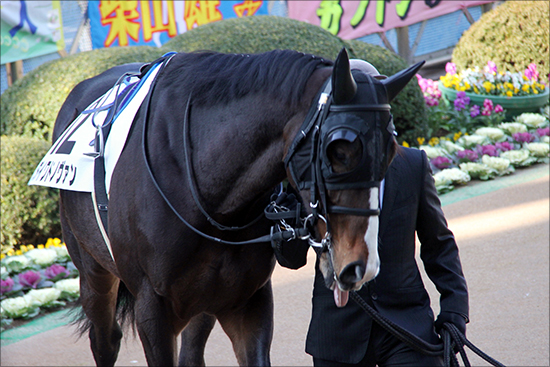 JRA「親子調教師」の悲喜こもごも......「所屬馬問題解消」も「スタッフのイメージ」根強く?の画像1