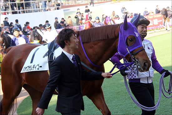 京都記念(G2)「大波乱」の主役はクロコスミア!? ジェンティルドンナ、ハープスターが沈んだ京都記念でG1馬より「狙える」理由