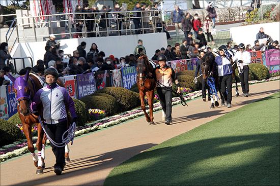 京都記念(G2)「大波乱」の主役はクロコスミア!? ジェンティルドンナ、ハープスターが沈んだ京都記念でG1馬より「狙える」理由の画像1