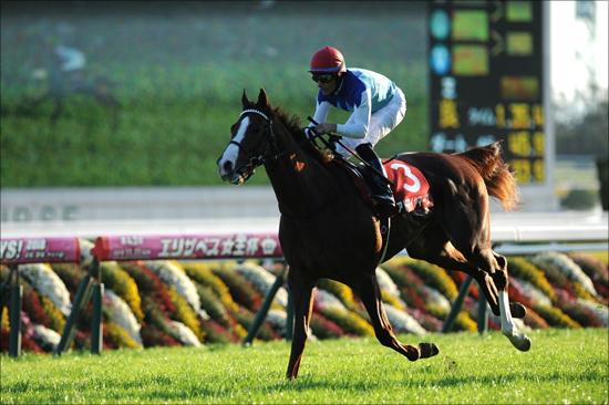 【共同通信杯(G3)展望】JRA2歳王者アドマイヤマーズ出陣! 武豊クラージュゲリエら逆転狙う素質馬たちも