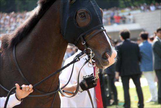 金鯱賞(G2)ダノンプレミアム好時計も「不安」拭えず......かつての「世代No.1」が3歳条件馬に置き去りの画像1