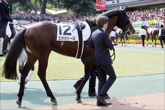 【菊花賞(G1)枠順確定】エポカドーロ、エタリオウの枠は? 3歳牡馬クラシック最後の1冠の行方を左右