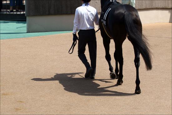JRA新人騎手「騎乗停止6カ月?」に衝撃......猛省して先輩も慰め&「凹んでろ!」助言