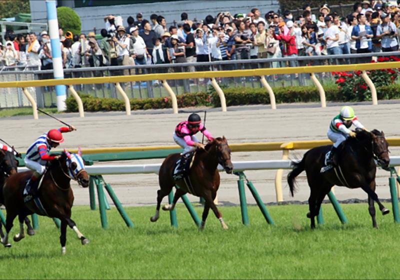 JRA東京新聞杯(G3)仕切り直しのロジクライ! 横山典弘騎手の「責務」
