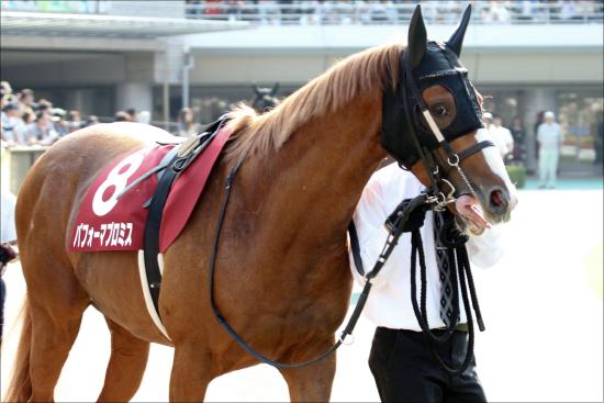 宝塚記念(G1)パフォーマプロミスが戸崎圭太と「持ってる馬」証明へ。過去戦績と血統から軽視不可能かの画像1
