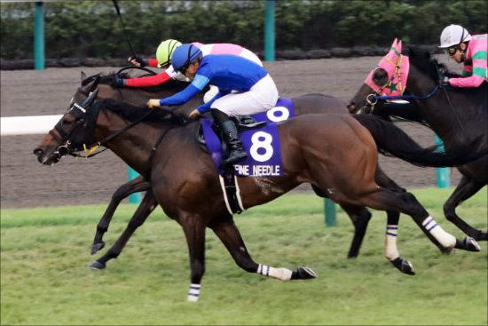 JRA「短距離王」ファインニードル引退。ダーレーの「思惑」と不完全燃焼の香港