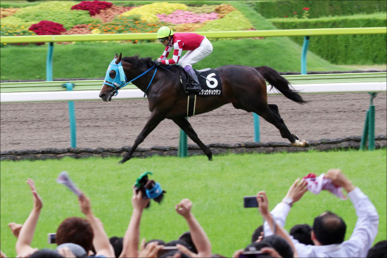 JRA平地オジュウチョウサン「ジャパンC回避」は大正解!? 有馬記念(G1)直行報道にファンが