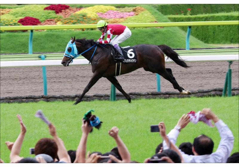 JRA「最強」の障害馬オジュウチョウサン出陣! 阪神スプリングジャンプ(G2)制覇に死角なし!?の画像1