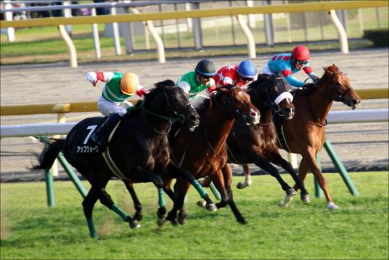 JRA東京新聞杯(G3)上がり馬インディチャンプの末脚はどこまで通用するのか?