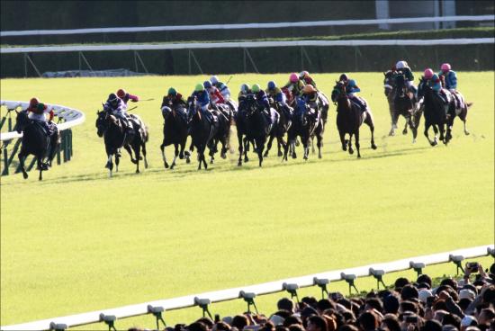 JRAマイルCS「幸英明代役」が京都騎乗経験なさすぎ!? マイル女王ジュールポレール「好走条件」は複数あるが......。の画像1