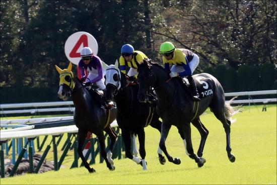 JRAルメール「マイルCSで怖い馬」ロジクライの可能性。C.デムーロで挑戦も「作戦」は