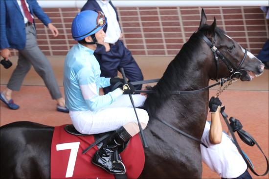 神戸新聞杯(G2)蛯名正義騎手がベテランの力見せる? ゴーフォザサミット「藤沢タッグ」で戴冠狙う