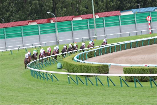 JRAは何故「炎天下」で長時間パドックを周回させるのか? 日本競馬における「熱中症対策」の矛盾と限界