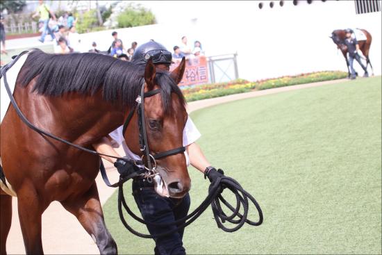 JRAスプリンターズS(G1)「香港馬」ラッキーバブルズ急浮上!? 「この馬に分がある」週末の「台風」直撃で状況激変!