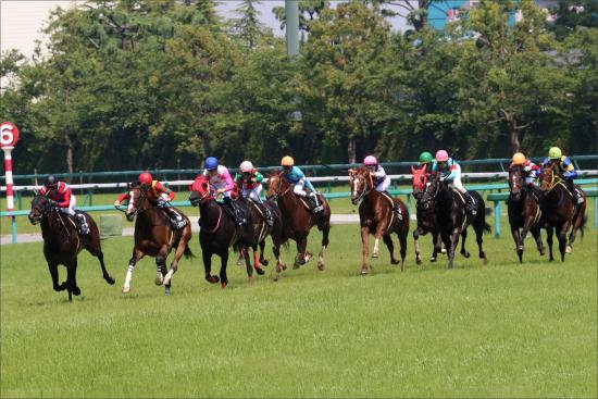 JRA「7冠牝馬」ジェンティルドンナの姪っ子が登場! ドナウデルタがデビュー
