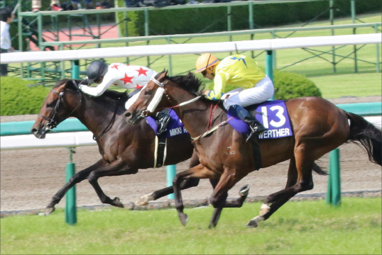JRA天皇賞・秋(G1)ミッキーロケットは「能力そのまま」走る馬......問題はいつでも「◯◯関係」!?