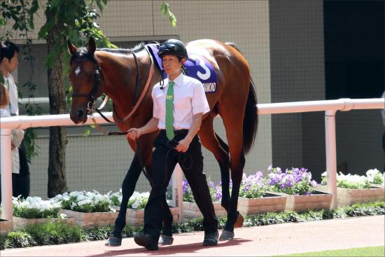 JRA新馬「2億8000万円」サトノジェネシス降臨! 「マルペンサ最後の仔」不安は馬よりモレイラ?