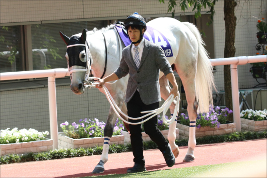 小室圭さんが有馬記念(G1)最強サイン!? ゲスト及川光博が示唆した「超大穴馬」激走で平成最後の大波乱?