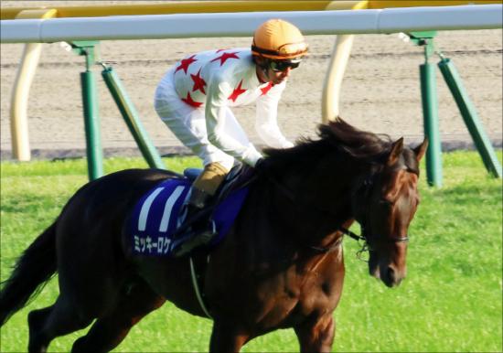 ジャパンC(G1)「ミッキーロケット回避」JRA戸崎圭太×音無厩舎「放馬除外」からアクシデント多発