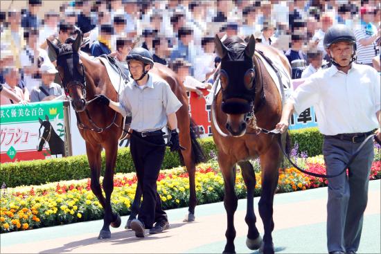 JRA 2歳戦線に「強者」現る。新潟2歳Sの覇者はケイデンスコール