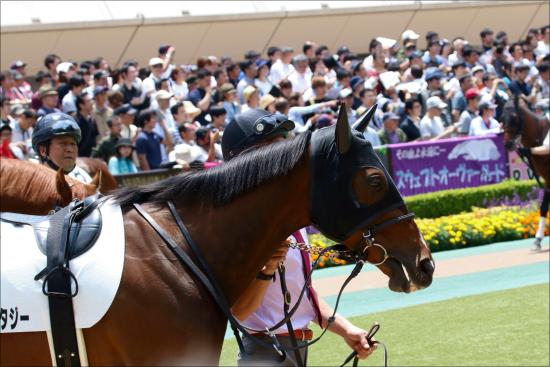 【新潟2歳S(G3)展望】世代屈指の瞬発力を見せるのはどの馬か?新潟競馬場での直線の叩き合いを制するのは!?