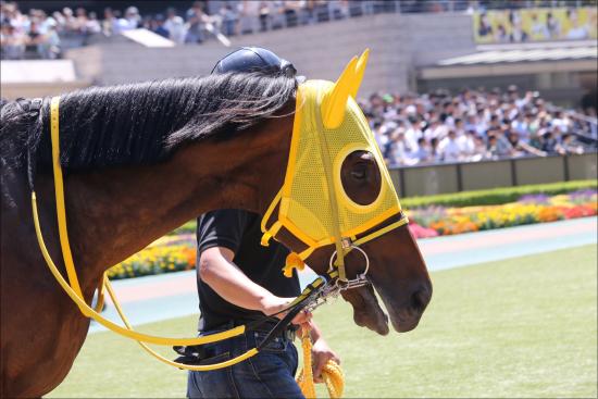 JRA最強良血馬ついに初陣! フランケル×デインドリームの不安要素の画像1