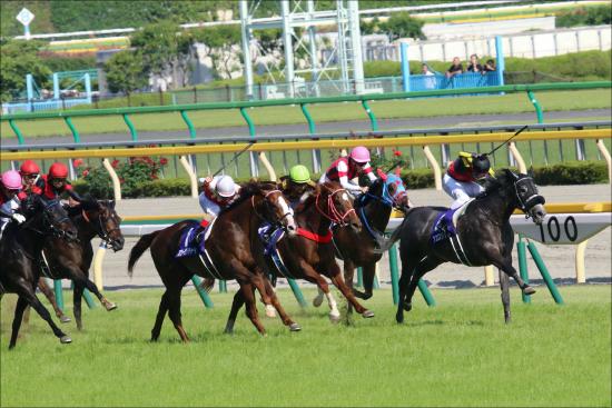 JRA「安い・速い・強い」今、ヴィクトワールピサ産駒が熱い! レッドアネモスが新馬戦勝ち