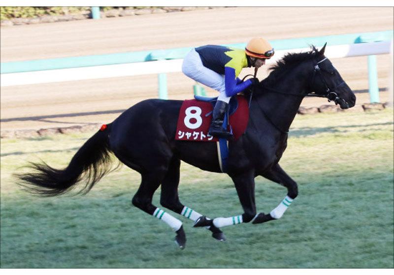 JRA阪神大賞典(G2)戸崎シャケトラ「不安は僕だけ」