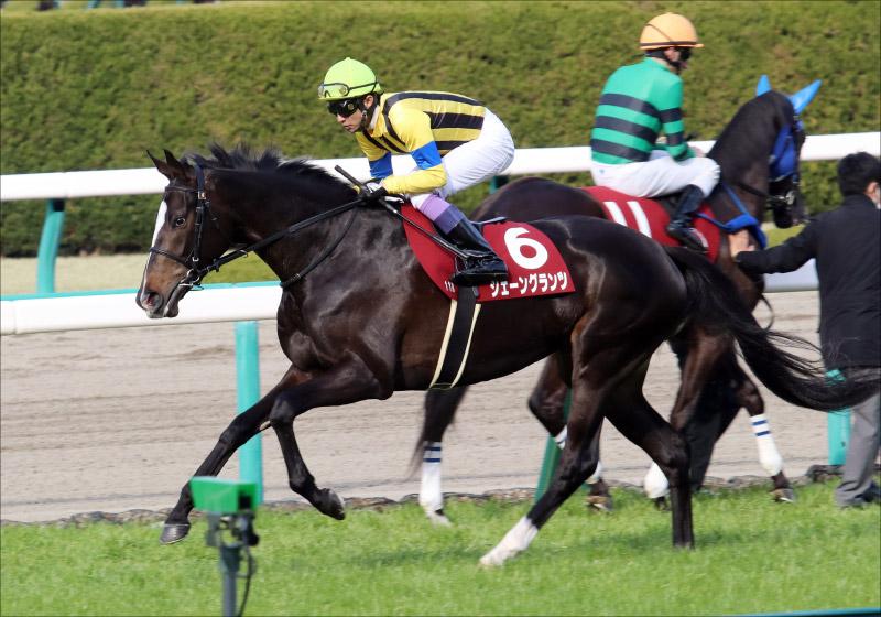 JRA桜花賞(G1)武豊「どう乗る」? シェーングランツ「1枠1番」は外回りコース12年間で勝利なし