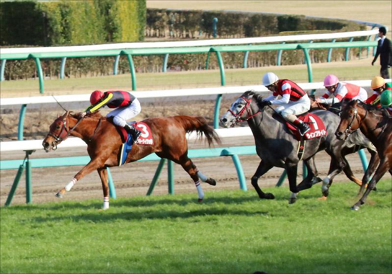 【阪神牝馬S(G2)展望】JRA「復活」ラッキーライラック久々勝利へ! 昨年クラシックを沸かせた4歳強豪集う