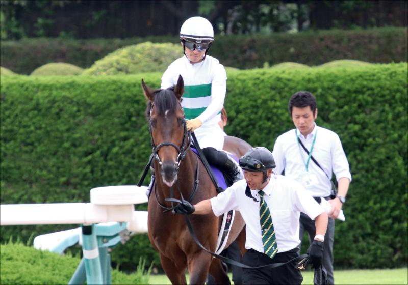 JRAキセキ「凱旋門賞挑戦」決定。同厩舎ロジャーバローズとともに果てなき夢へ始動か
