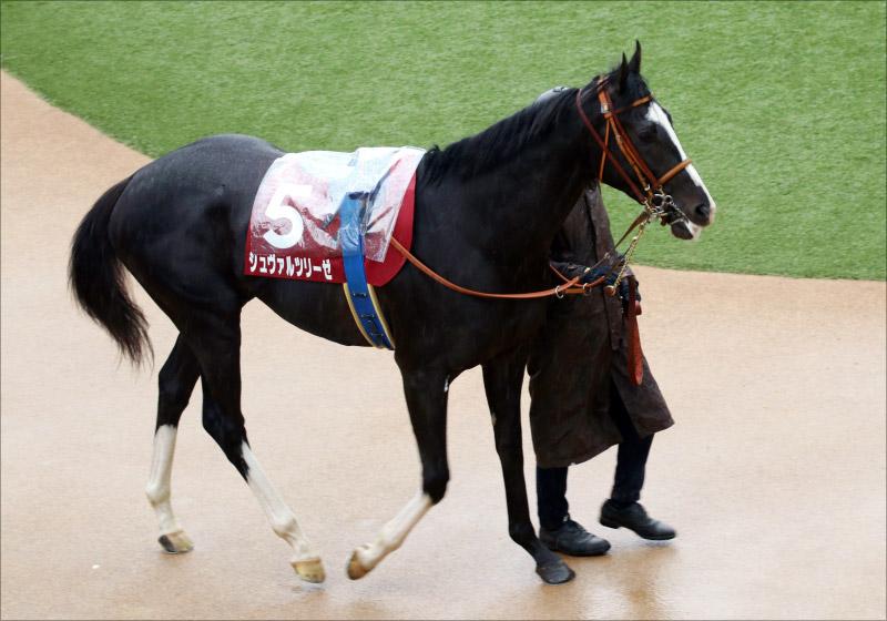 JRA皐月賞(G1)「未知の魅力」シュヴァルツリーゼ。復活堀宣行厩舎で「第二のサトノクラウン」への道も