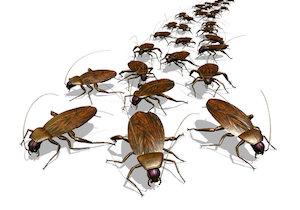 殺虫剤を使わずゴキブリを完璧に追い出す!たった5カ月で32万匹、驚異の繁殖力を封じる