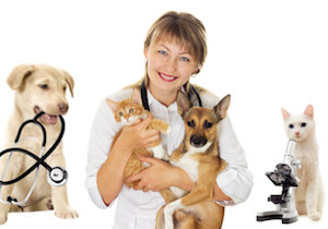 ペットの長寿に「再生医療」「がん免疫細胞治療」! イヌとネコの平均寿命がの画像1