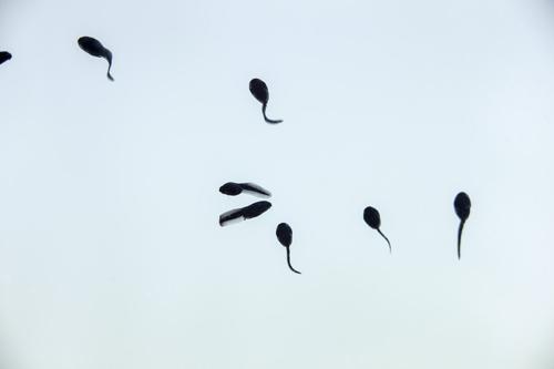 今度は精子の老化 「精子検定」に追い詰められる男たち?!の画像1