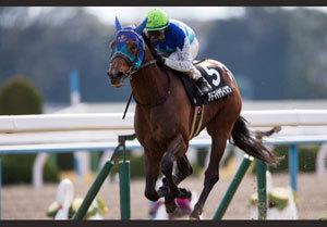 【徹底考察】皐月賞(G1)アドマイヤダイオウ&ナムラシングン 「8馬身差圧巻の若葉Sの評価は......」