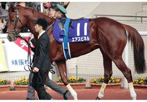【徹底考察】弥生賞(G2)エアスピネル「このままでは終わらせない。不屈のエリート馬の雪辱戦が幕を開ける」