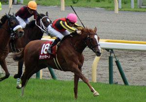 チェッキーノが「競走馬のガン」発症でクイーンS回避......日本最大のクラブ法人サンデーレーシング馬に次々トラブルは「呪い」?