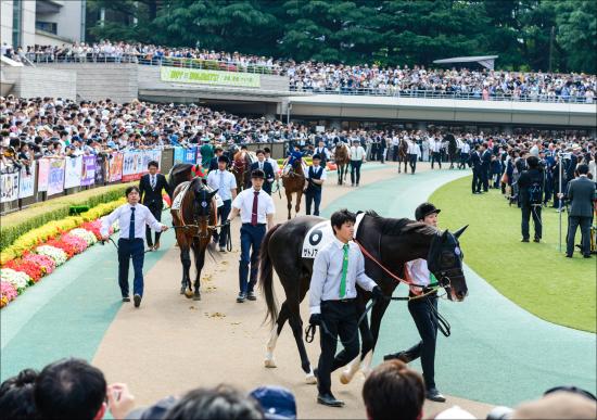 キタサンブラックはいずれサトノクラウンにボロ負け? 国際レーティングに見る日本競馬の評価