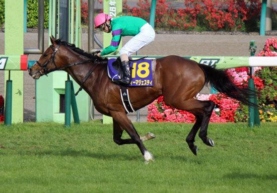 【徹底考察】ジャパンC(G1) ディーマジェスティ「屈辱の菊花賞で『何』があったのか。最強世代証明へ皐月賞馬が背負う『重大な役割』とは」