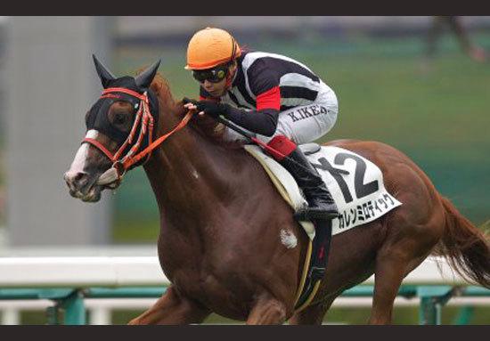 海外馬券発売の第2弾メルボルンCが11月1日に開催!日本のカレンミロティックを始めとした有力馬情報を公開