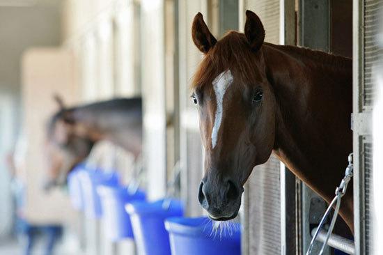 【日本ダービー(G1)1週前追い切り】青葉賞レコードのアドミラブル「独特調整」が不気味!? 皐月賞馬アルアイン上々も、武豊ダンビュライト併せ馬で遅れ......の画像1